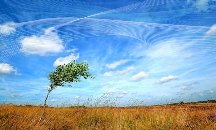 wind vane silhouette